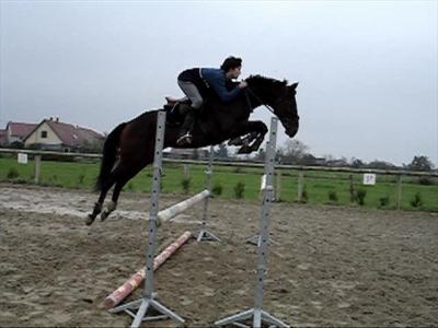 Le saut d 39 obstacle - Frison saut d obstacle ...